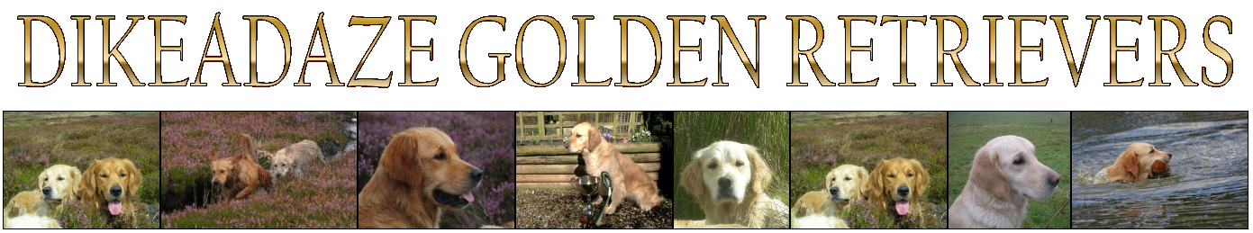 Dikeadaze Golden Retrievers